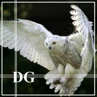 Dorian Ghost