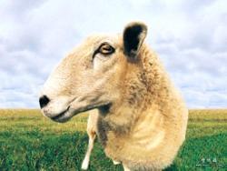 Digital Farm Animalz