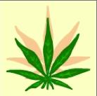 Cannabis Clan