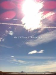 My Cats a Stargazer