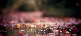 Музыкальная подборка: Музыка на осеннего настроения