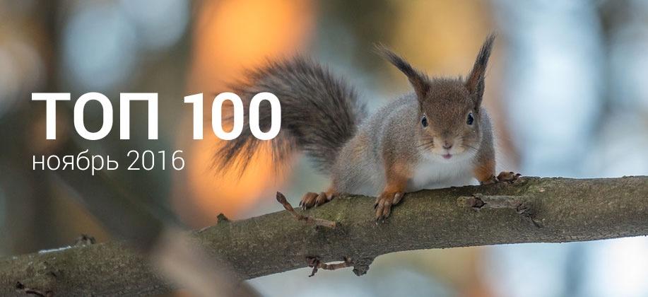 Топ 100 Zaycev.net ноябрь 2016