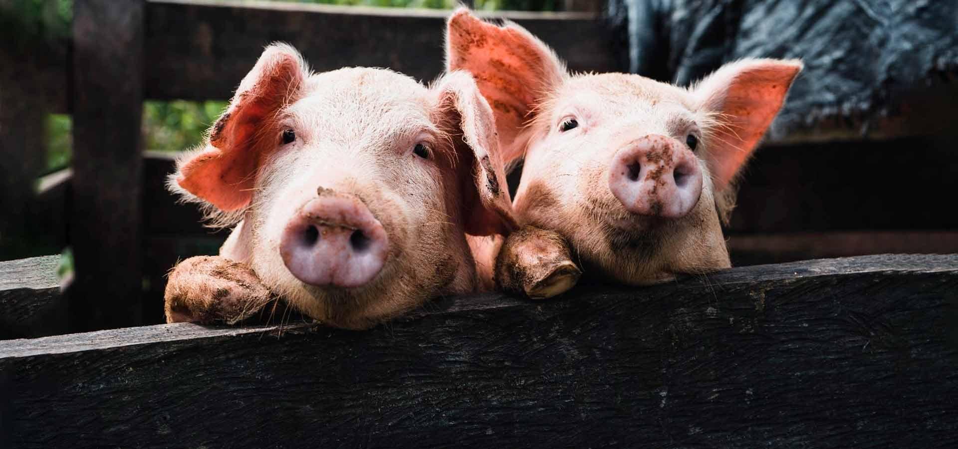 Зоозащитники призывают не использовать животных в качестве оскорблений людей